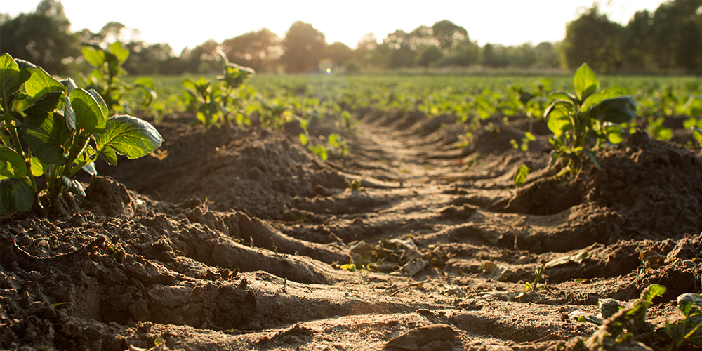 The Secret is in the Soil: How to Cultivate a Mission-Driven Culture