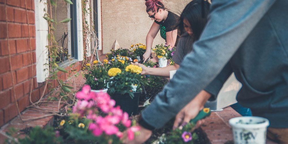 Tending to Your Growing Culture- Six Tactics to Keep Your Company Values Alive